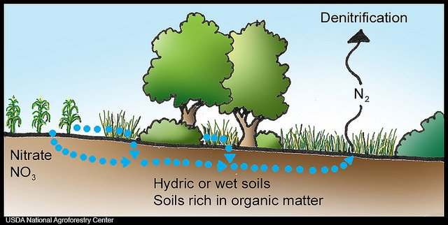 Biological Denitrification Process In Waste Water