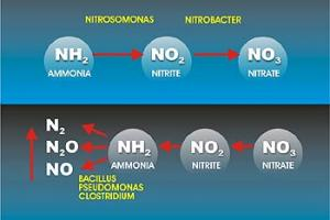 Nitrification Process